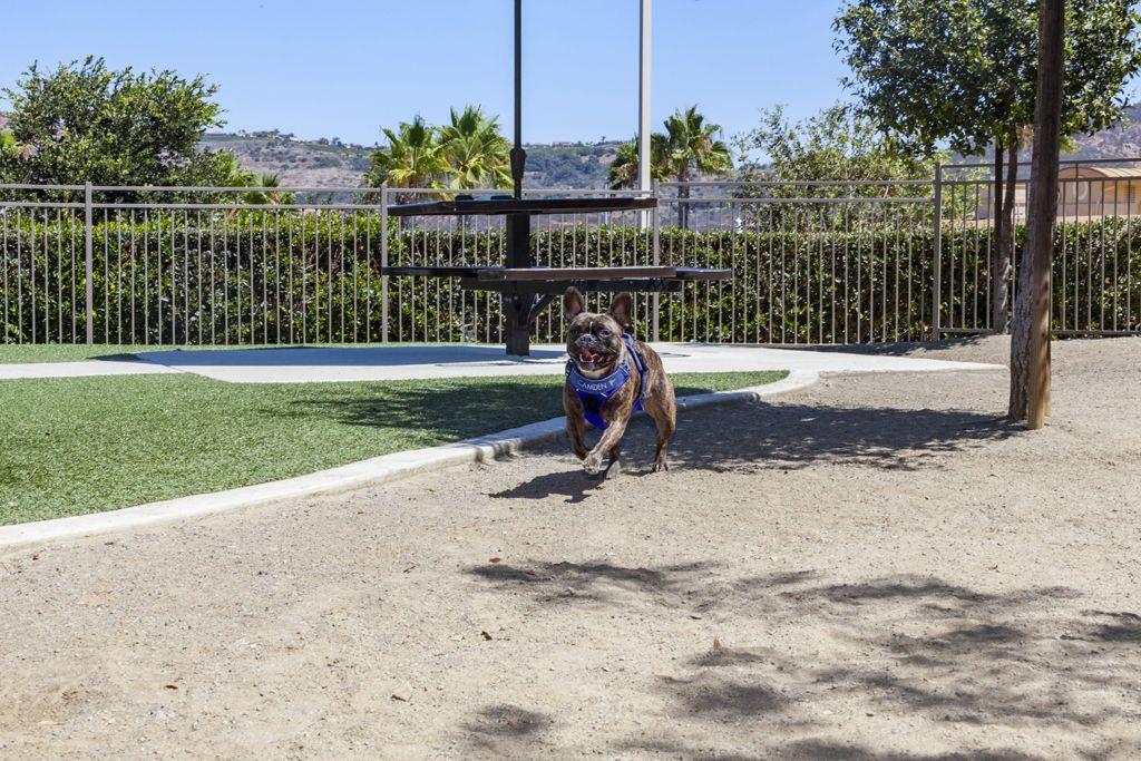 Dog Friendly....Off Leash Dog Parks