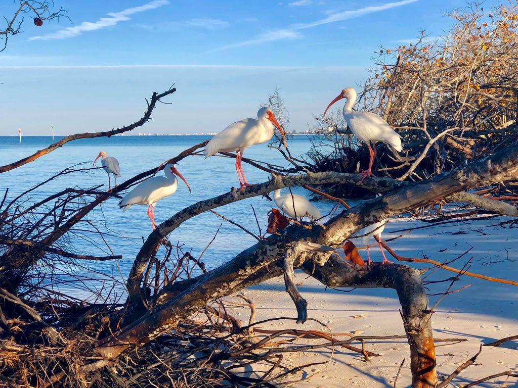 Florida hat eine wunderschöne Natur - Tierliebhaber kommen auf Ihre Kosten