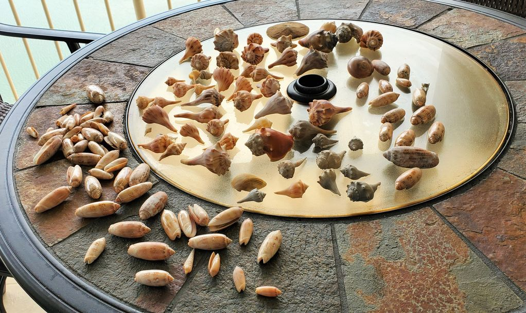 Our Guests found this Beautiful Seashell collection.