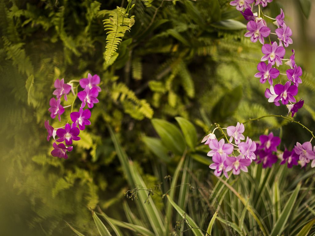Wild growing orchids in our tropical garden!