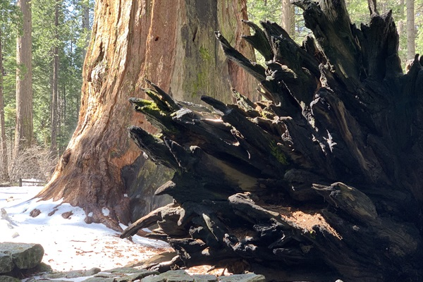Big Trees State Park
