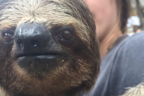 Do you want to hug a sloth?