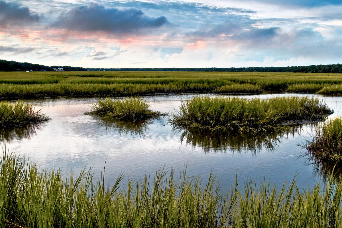 Marshes are Plentiful